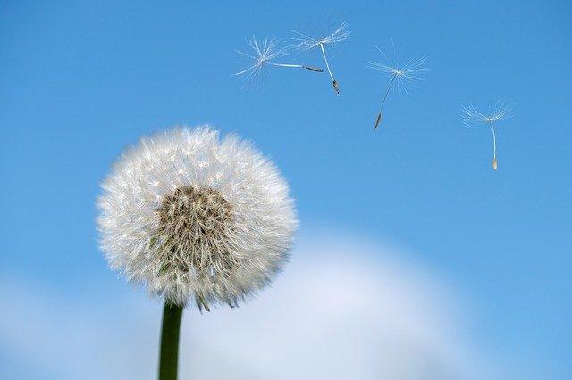 La esencia de las alergias. ¿Por qué hacerse la prueba de inmunoglobulina E?